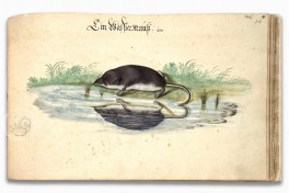 Book on Fishes, Birds, and Mammals by Leonhard Baldner Facsimile Edition