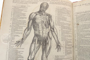 Andreas Vesalius: De Humani Corporis Fabrica and Epitome, Kyoto, International Research Center for Japanese Studies Library, I/115 − Photo 7