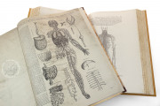 Andreas Vesalius: De Humani Corporis Fabrica and Epitome, Kyoto, International Research Center for Japanese Studies Library, I/115 − Photo 8