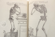 Andreas Vesalius: De Humani Corporis Fabrica and Epitome, Kyoto, International Research Center for Japanese Studies Library, I/115 − Photo 12