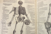 Andreas Vesalius: De Humani Corporis Fabrica and Epitome, Kyoto, International Research Center for Japanese Studies Library, I/115 − Photo 17