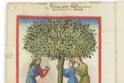 Tacuinum Sanitatis, Paris, Bibliothèque Nationale de France, Ms. Lat 9333 − Photo 16