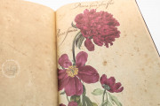 Hortus amoenissimus by Franciscus de Gees, Rome, Biblioteca Nazionale Centrale, Varia 291 − Photo 6