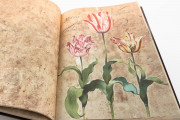 Hortus amoenissimus by Franciscus de Gees, Rome, Biblioteca Nazionale Centrale, Varia 291 − Photo 7
