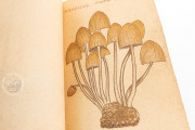 Book of Mushrooms, Private Collection − Photo 7