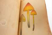 Book of Mushrooms, Private Collection − Photo 10