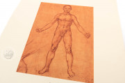 Corpus of the Anatomical Studies (Collection), Windsor, Royal Library at Windsor Castle − Photo 5