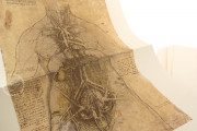 Corpus of the Anatomical Studies (Collection), Windsor, Royal Library at Windsor Castle − Photo 8