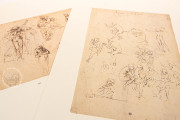 Drawings of Leonardo da Vinci and his circle - Public Collection, Multiple Locations − Photo 12