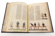 The Art of Falconry by Frederick II - De Arte Venandi Cum Avibus, Vatican City, Biblioteca Apostolica Vaticana, Pal. Lat. 1071 − Photo 7