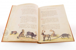 The Animal Book of Pier Candido Facsimile Edition