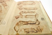 Sketch Book of Giovannino de Grassi, Ms. VII. 14 - Biblioteca Civica Angelo Mai (Bergamo, Italy) − photo 19