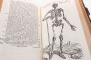 Andreas Vesalius: De Humani Corporis Fabrica, London, British Library, 548.i.2.(1) − Photo 8