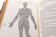 Andreas Vesalius: De Humani Corporis Fabrica, London, British Library, 548.i.2.(1) − Photo 10