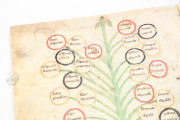 Ramon Llull's Tree of the Philosophy of Love, Palma de Mallorca, Biblioteca Diocesana de Mallorca, F-129 − Photo 4